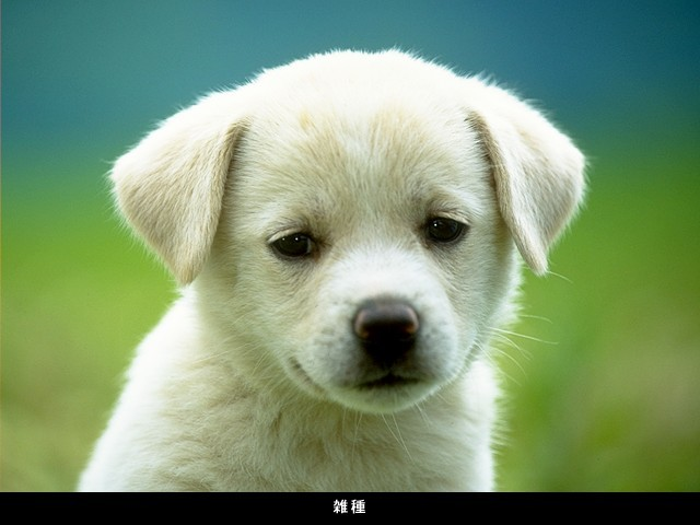 Ebeveynleri bir köpek almaya ikna etme